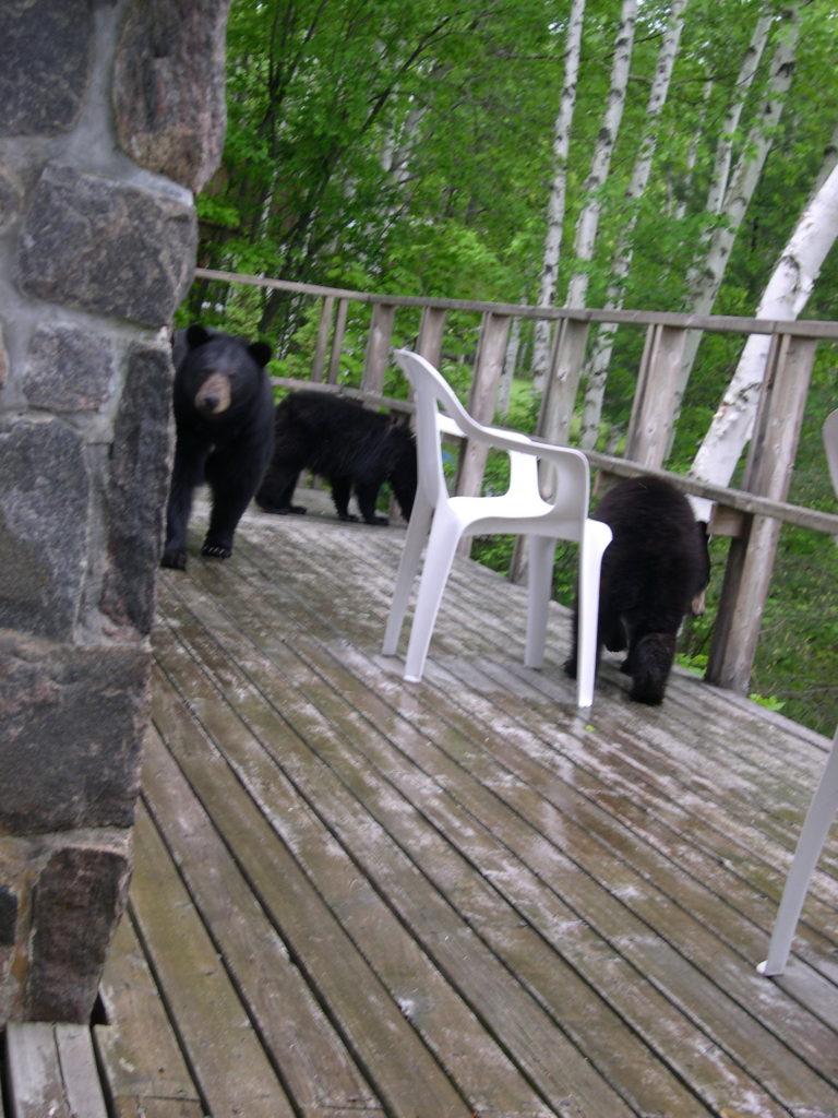 Three bears on deck