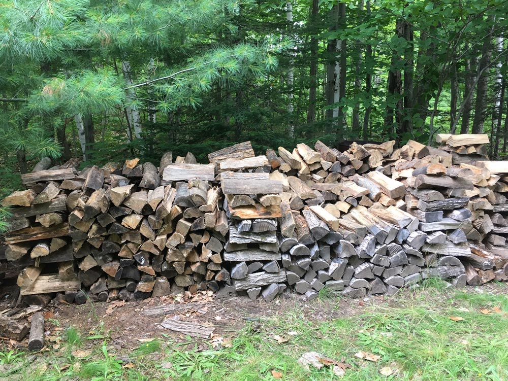 wood pile in a forest