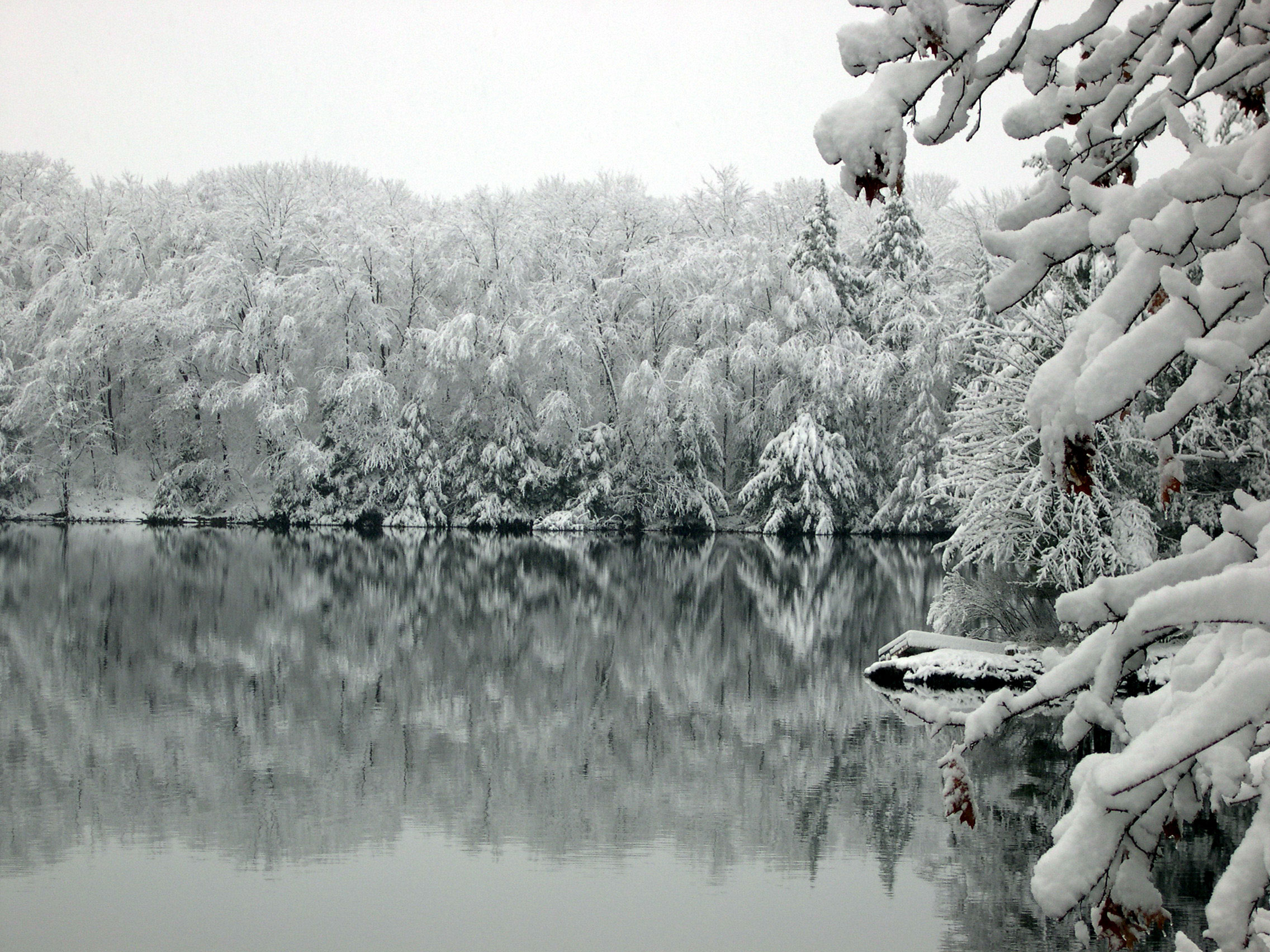 Snow on trees by a mirror lake
