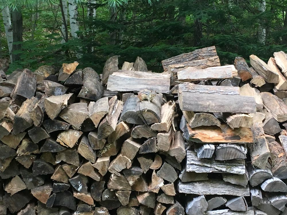 Chipmunk on a woodpile