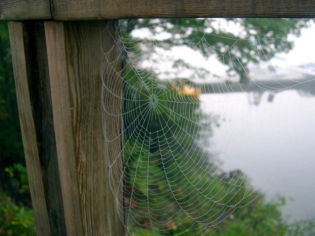 Spider web on deck