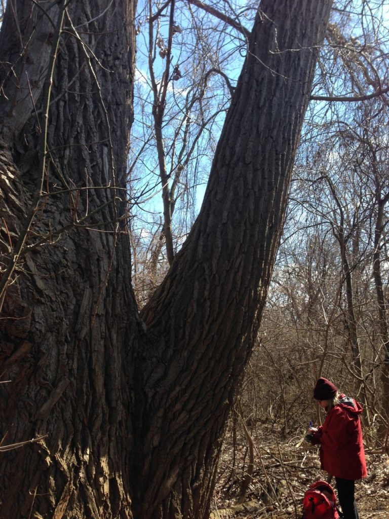 Large tree with woman in red coat at the base