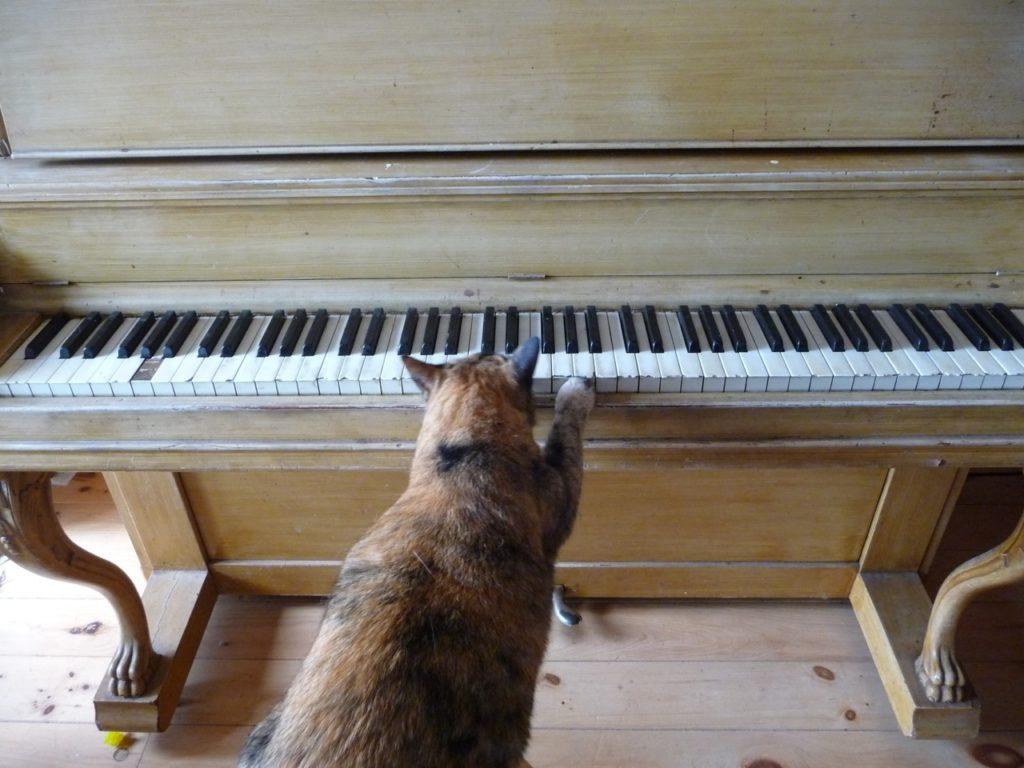 orange cat playing piano
