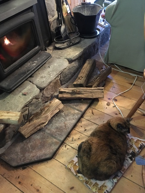 Cat on a bed in front of wood stove