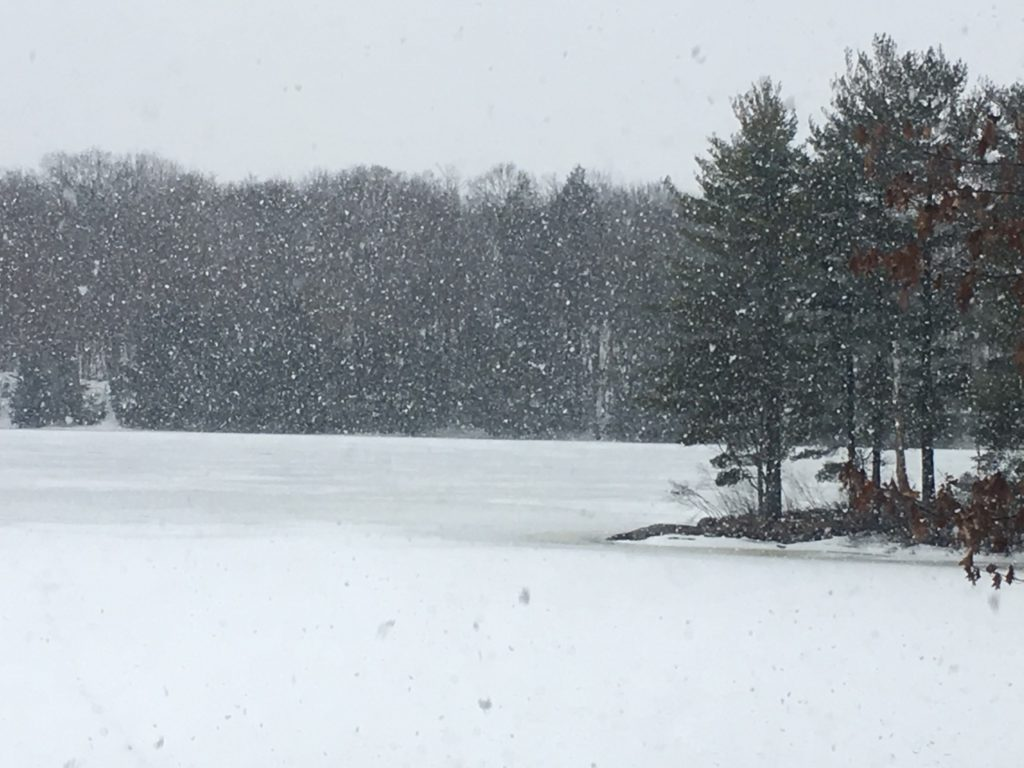 snow falling on tree-lined lake