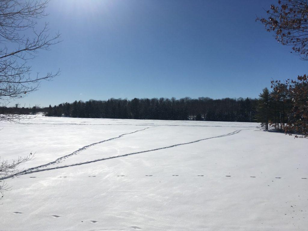 snowshoe tracks on snowy lake