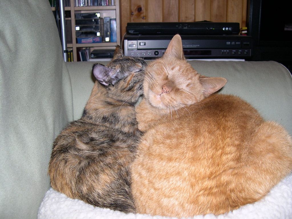 two orange cats on a couch