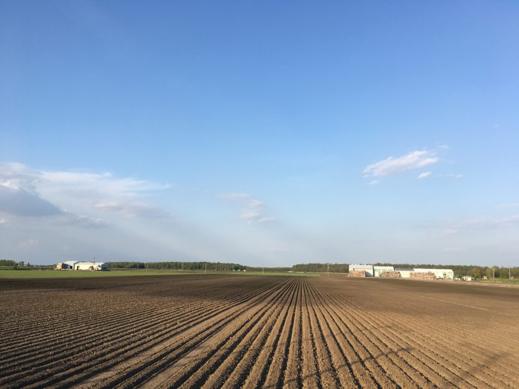view of a farm and blue sky
