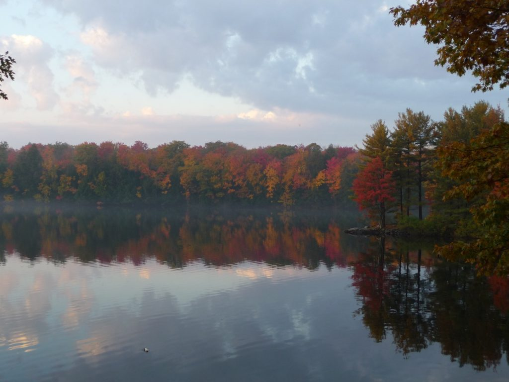 fall colours on a misty lake