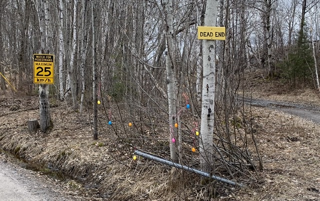 Easter eggs in trees on dirt road
