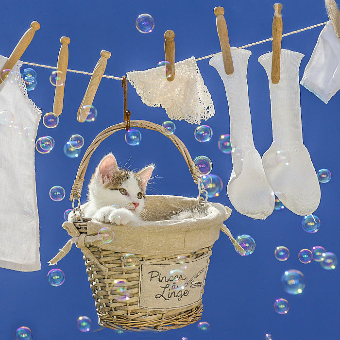 bubbles and laundry